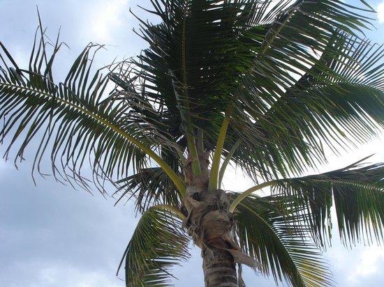 Hotel Barcelo Maya Beach: Lecture sous les palmiers