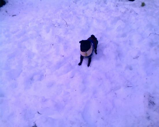 Pinecrest Chalet: Our Pug loves the Pinecrest snow!