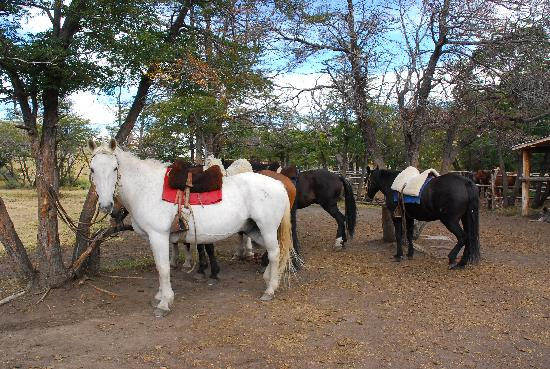 explora Patagonia : Authentic Transportation - Huaso Style
