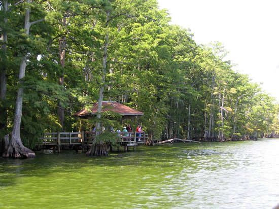 Reelfoot Lake Pontoon Boat Cruise