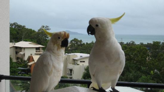 Blue Horizon Resort Apartments: Cockatoos and the view
