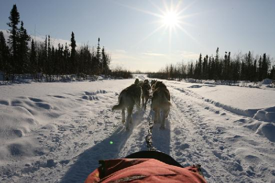 Bettles Lodge: Dog Sledding with Max in Winter Wonderland