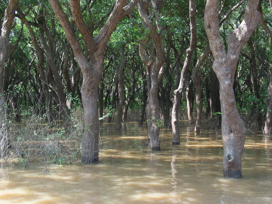 Siem Reap, Cambodge : Kompong Phhluk - Flooded Forest