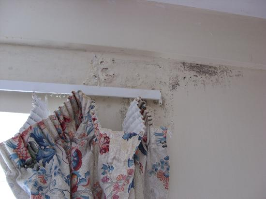 Renshaw's : curtains and damp