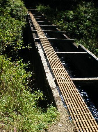 Pua'a Ka'a State Park: Bridge