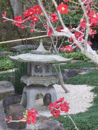 Kamakura, Japan: garden