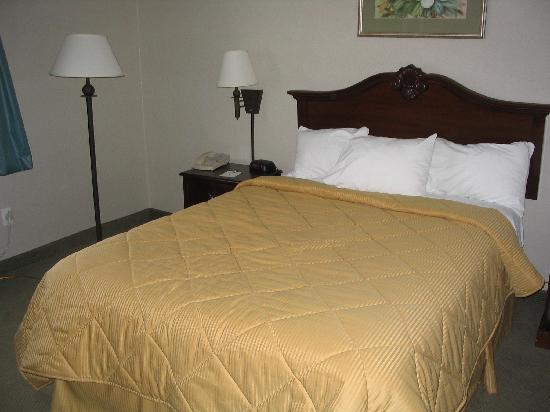 Quality Inn : Kingsize bed in single room in Comfort Inn