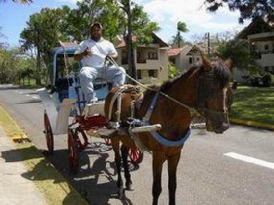 Occidental Caribbean Village Playa Dorada : Transportation around complex - Domingo