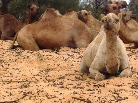Keur Salim: Camels around back that you can ride.