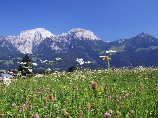 Alm- & Wellnesshotel Alpenhof: The Alps Surrounding the Alpenhof