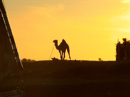 Luxor, Egypt: Camel at sunset