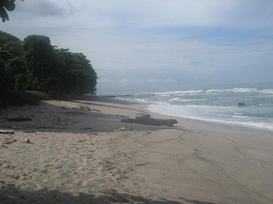 Florblanca Resort : Beach in Santa Theresa