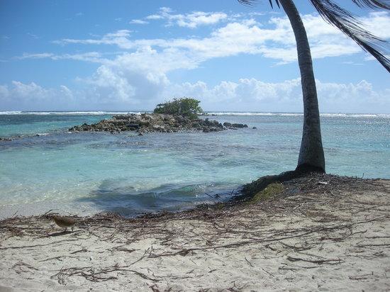 Sainte-Anne, Γουαδελούπη: La barrière de corail au sud de la Plage de la Caravelle, Ste-Anne