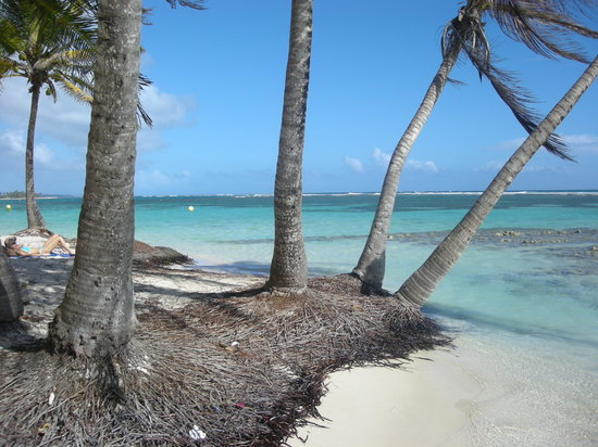 Sainte-Anne, Guadeloupe: A l'ombre des cocotiers, Plage de la Caravelle, Se-Anne