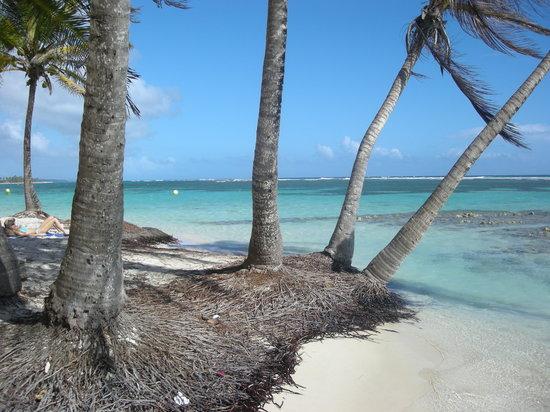 Sainte-Anne, Γουαδελούπη: A l'ombre des cocotiers, Plage de la Caravelle, Se-Anne