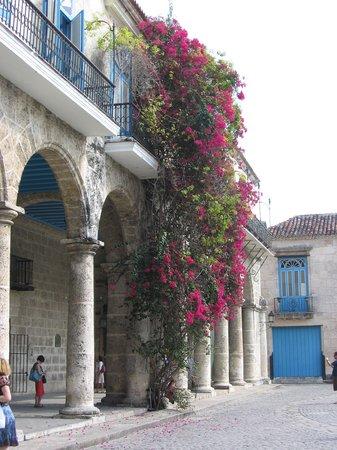 Old Havana square