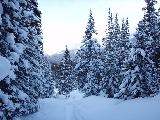 Sagewood Cabins: view while snowshoeing