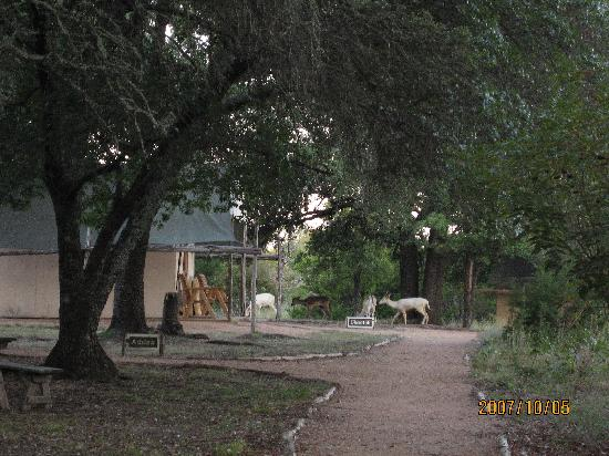 ‪‪Foothills Safari Camp at Fossil Rim‬: Early Morning at Safari Camp‬