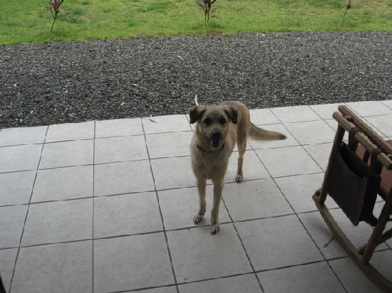 Villas Tranquilas: Pablo.....really cute,well-mannered dog who was always around and loved attention