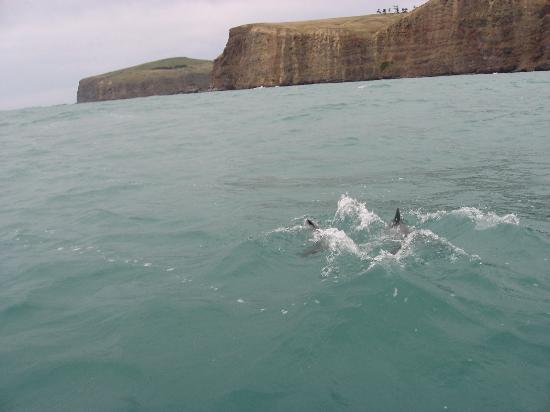 Le Bons Bay Backpackers: Dolphins everywhere...