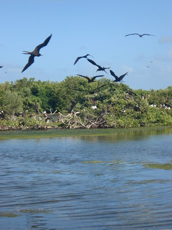 Frigate Bird Sanctuary