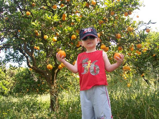 Casa da Horta: picking oranges at casa de horta