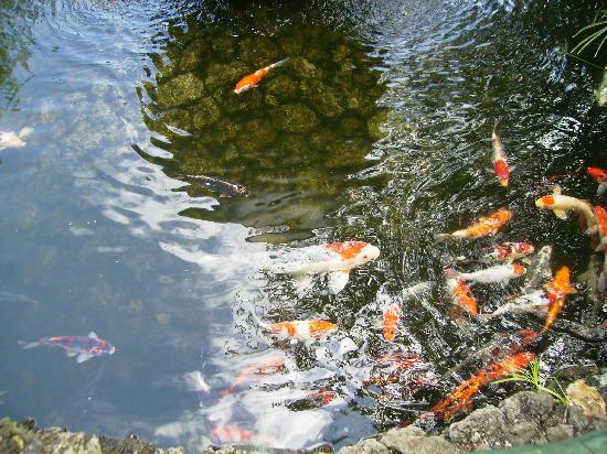 Image gallery el estanque - Estanques para jardines ...