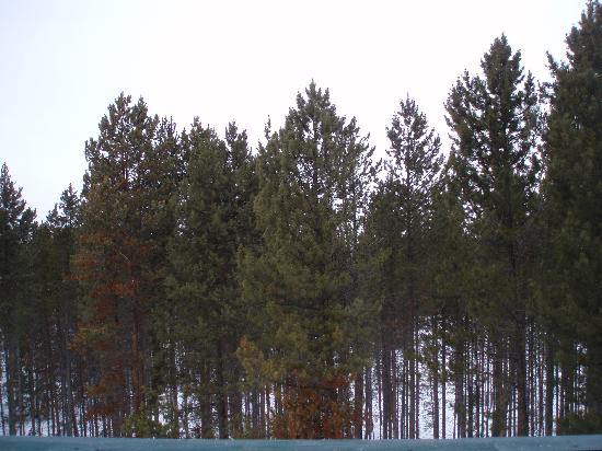 Engelmann Pines : View from room 5