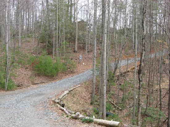 Hot Springs Log Cabins: Pine Cabin Drive and Nearest Cabin