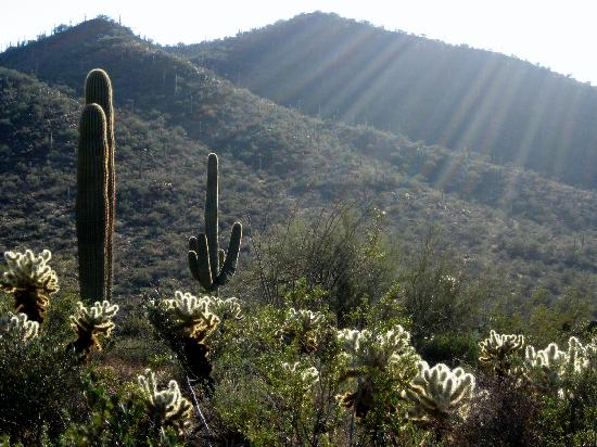 Saguaro National Park, AZ: More Cactus