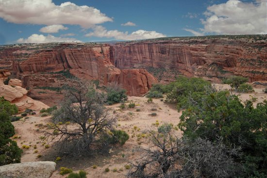 Canyon de Chelly National Monument: desert flora at the canyon edge