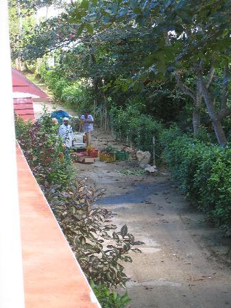 Punta Bonita Beach Resort : livraison au restaurant