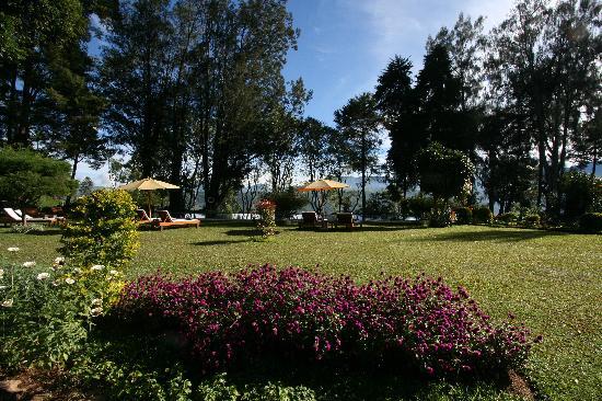 Ceylon Tea Trails: Garden at Norwood Bungalow