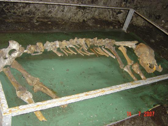 Southern Romania, Ρουμανία: Women Cave (Pestera Muierilor) 4