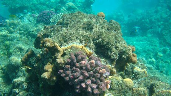 Sudan Red Sea Resort : corals
