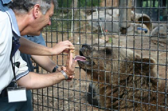 National Zoo and Aquarium: Canberra Zoo & Aquarium - bear licking honey and peanut paste - a touching experience