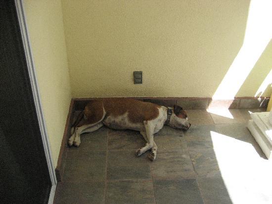 Pelican Reef Villas Resort: You get your own dog