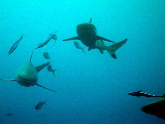 Palaos: immersion fuera de los arrecifes