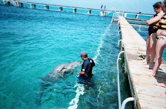 Preparing To Swim W Dolphins Picture Of Melia Cozumel