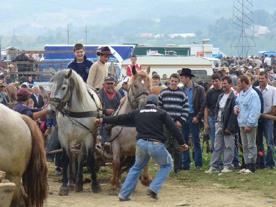 Maramures County, Rumania: A livestock market