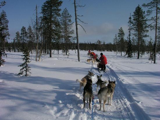 Akaslompolo, Finlandiya: Dog Sled in Lapland, Finland