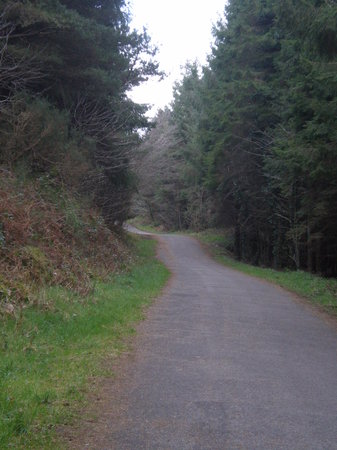 Cratloe Woods