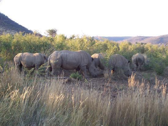 แอฟริกาใต้: Game Park