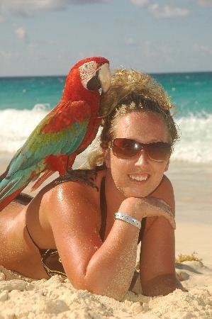 Occidental Caribe : perroquet
