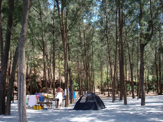 Anawangin Cove: Tents under the pine trees