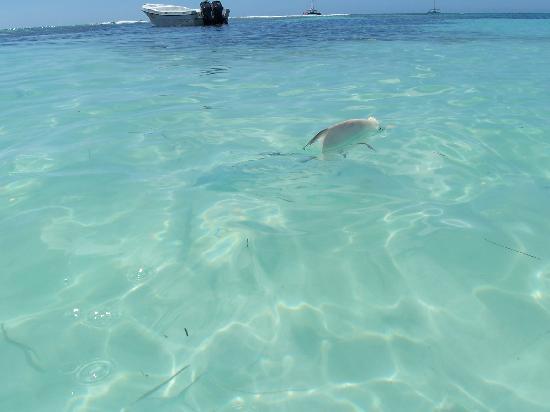 Coral Costa Caribe Resort & Spa: Poissons Ile Saona