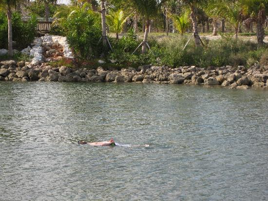 Peanut Island Park: Snorkeling in the lagoon