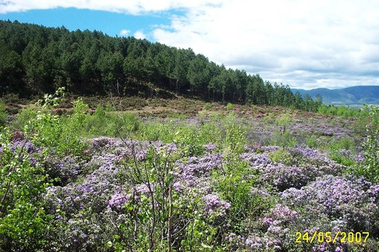 Yunnan, Kina: Wildflowers everywhere