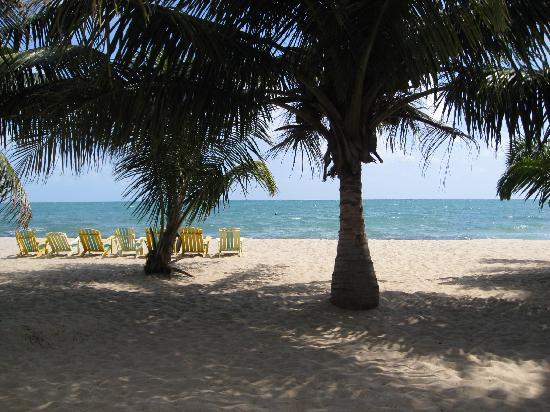 Toucan Lulu Beach Units: View from BareFoot Beach Bar