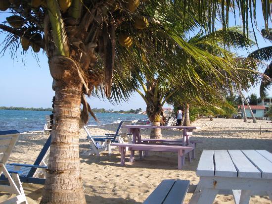 Toucan Lulu Beach Units : BareFoot Beach Bar View